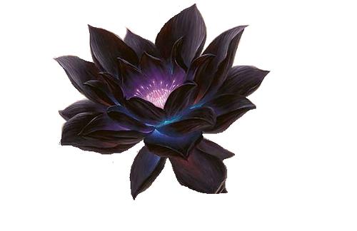 Dark Lotus Flower - Flowers Ideas For Review