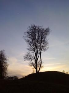 danebury-tree.jpg