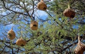 nests7