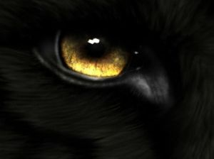 the-big-black-wolf-eye-fire-dragon-picture